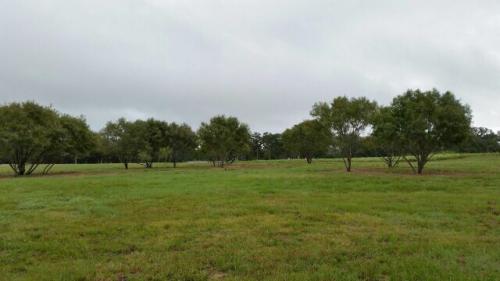 Land Clearing TX